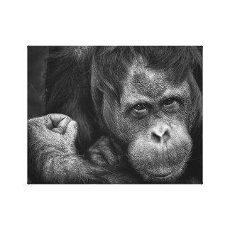 Orang-Utan Primat-Leinwand Leinwanddruck