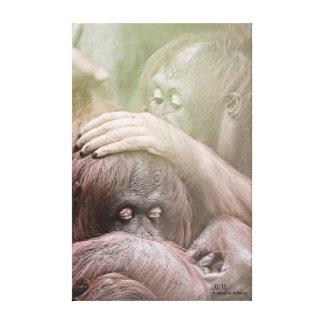 Orang-Utans dehnten Leinwand-Druck aus Leinwanddruck