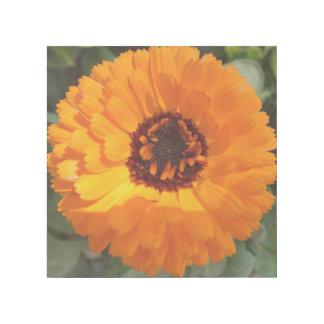 """Orange Blume 12"""""""" Verpackung der Galerie-X12 Galerieleinwand"""