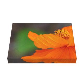 Orange BlumenLeinwand-Druck Leinwanddruck