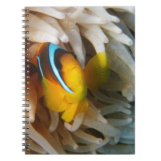 Orange Clown-Fische Notizblock