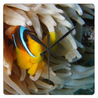 Orange Clown-Fische Quadratische Wanduhr