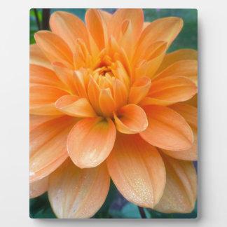 Orange Dahlie Fotoplatte