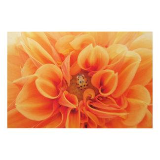 Orange Dahlie mit Marienkäfer Holzleinwand