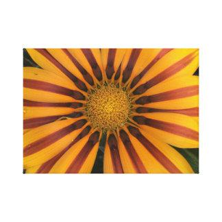 Orange Daisybush Leinwanddruck
