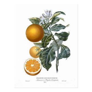 Orange durch Pierre - Antoine Poiteau Postkarte