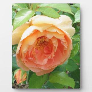 Orange erröten Rose Fotoplatte