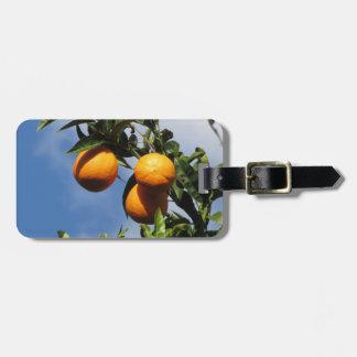 Orange Früchte, die am Baum gegen das Blau hängen Gepäckanhänger