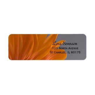 Orange Gänseblümchen auf grauer Rücksendeadresse