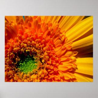 Orange Gänseblümchen-Leinwand-Druck Poster