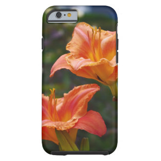Orange Garten Tough iPhone 6 Hülle