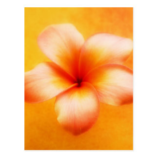 Orange Gelbplumeria-Blumen-Orangen-Hintergrund Postkarte