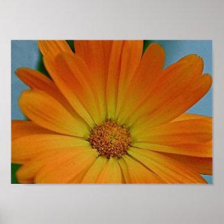 Orange Gerber Gänseblümchen Poster