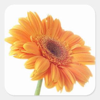 Orange Gerbera-Gänseblümchen-Blumen-Hochzeits-mit Quadratischer Aufkleber