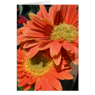 Orange Gerbera-Gänseblümchen Karte