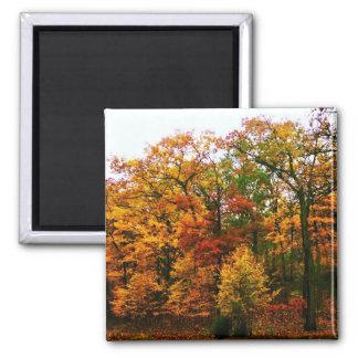 Orange Herbst-Bäume Quadratischer Magnet