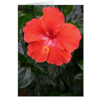 Orange Hibiskus-Blume Karte