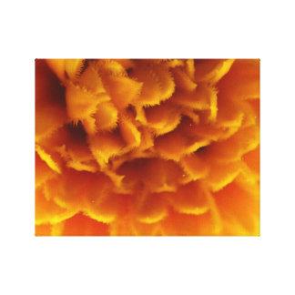 Orange in der Blüte Leinwanddruck