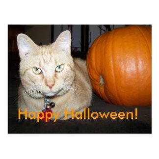 Orange Katze mit Kürbis-Postkarte Postkarte