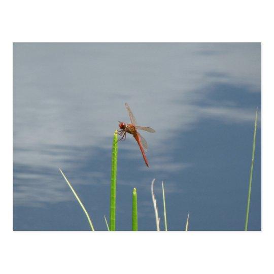 orange Libelle auf dem Grashalm Postkarte