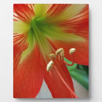 orange Lilie Fotoplatte