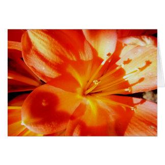 Orange Lilie Karte