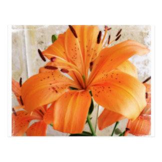 Orange Lilien: Blumen: Postkarte