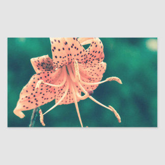 Orange lilly crossprocess4 rechteckiger aufkleber