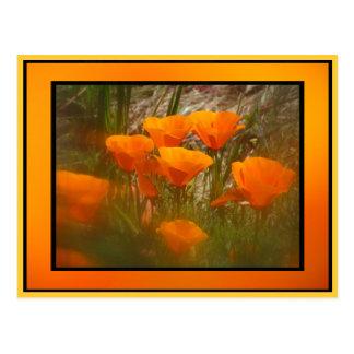 Orange Mohnblumen-Blumen Kaliforniens Postkarte