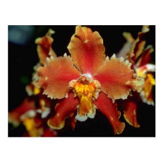 Orange Oncidium Blumen Postkarte