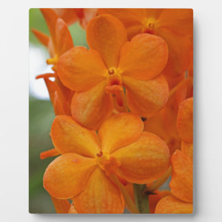 Orange Orchideen Fotoplatte