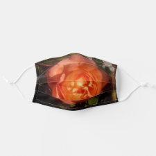 Orange Rose gefällig