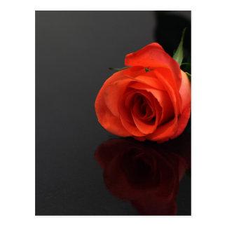 Orange Rose Postkarte