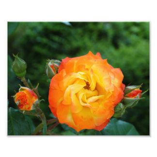 Orange Rosen-Meditations-Foto-Wand-Dekor Fotodruck