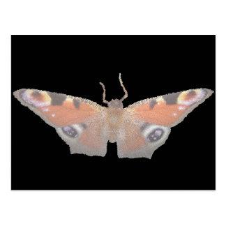 orange Schmetterling (digitalisiertes Bild) Postkarte