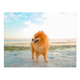 Orange Spitz-Hund am Strand Postkarte