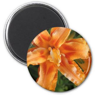 orange stargazer.JPG Runder Magnet 5,7 Cm