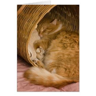 Orange Tabby, der in der Fessel schläft Karte