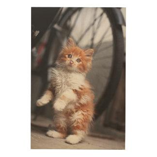 Orange Tabby-Kätzchen Holzleinwand
