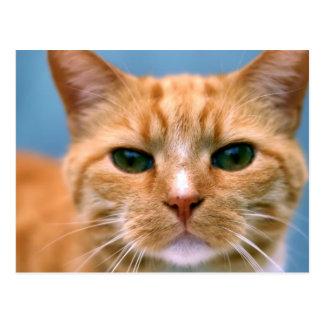Orange Tabby-Miezekatze-Kätzchen-Katze Postkarte