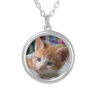 Orange Tabby u. weiße Kätzchen-Halskette Versilberte Kette