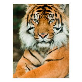 Orange Tiger-Postkarte Postkarte