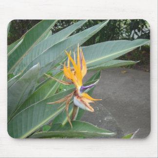 Orange tropische Blume Mauspad