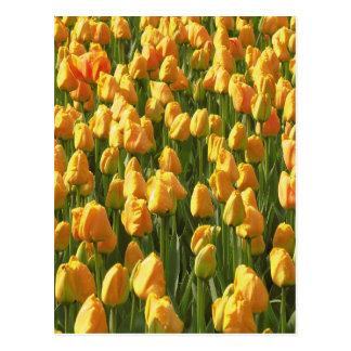 Orange Tulpe-Blumen Postkarte