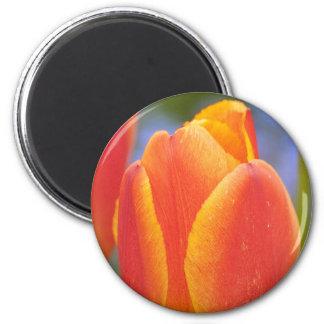 Orange Tulpe Runder Magnet 5,1 Cm
