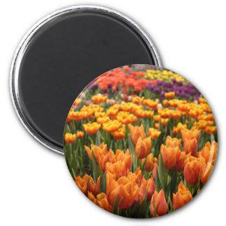 Orange Tulpe Runder Magnet 5,7 Cm