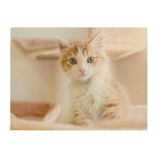 Orange u. weißes Kätzchen Holzdruck