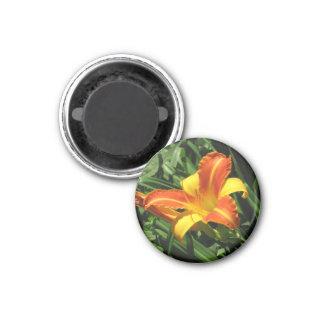 Orange und gelber Lilien-Magnet Runder Magnet 3,2 Cm
