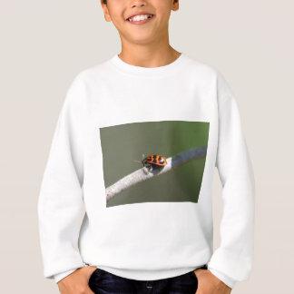 Orange und schwarze Blatt-Wanze - Chrysomela Sweatshirt
