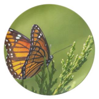 Orange und schwarzer Monarchfalter Teller